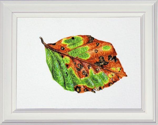 Beech leaf painting framed