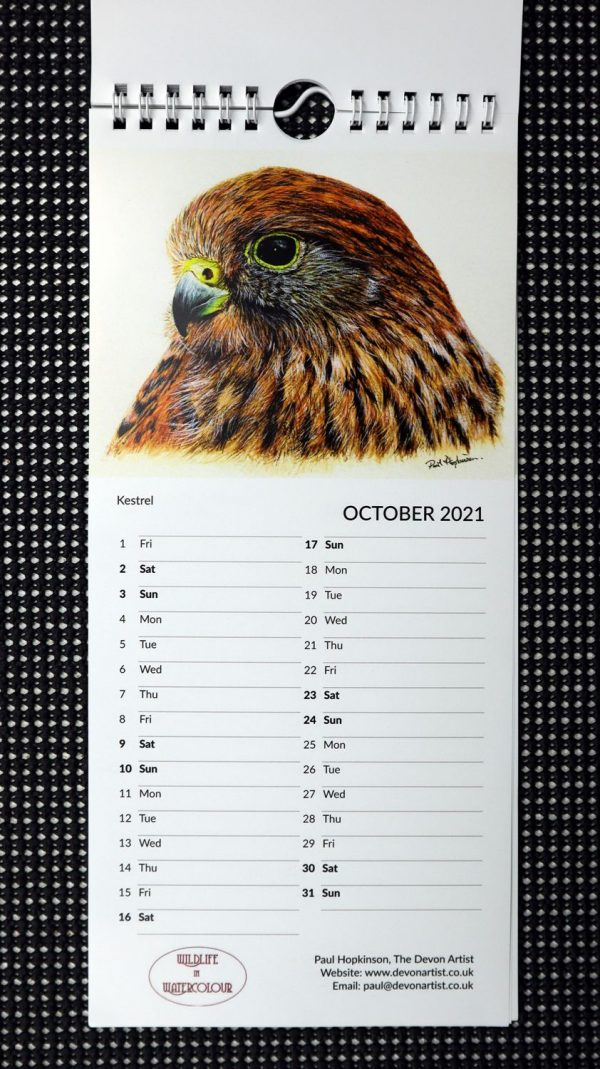 Wildlife paintings of birds in watercolour on a calendar
