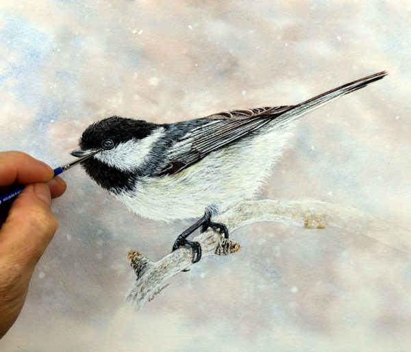Black capped chickadee being painted by Paul Hopkinson in watercolor