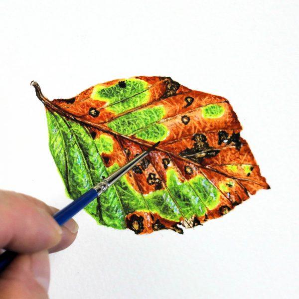 Botanical watercolor leaf study