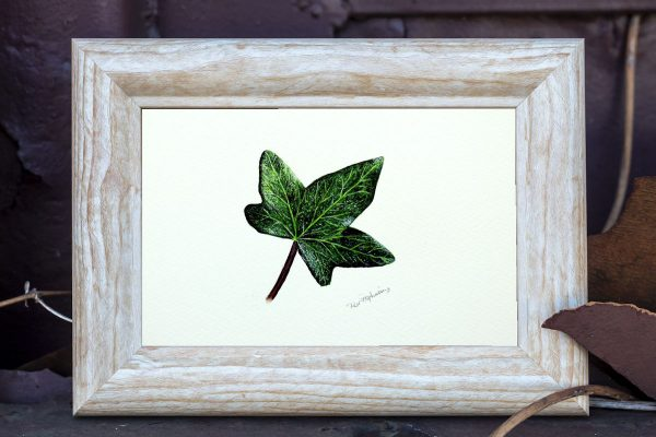 A botanical watercolour painting of an ivy leaf by Paul Hopkinson in a rustic style frame