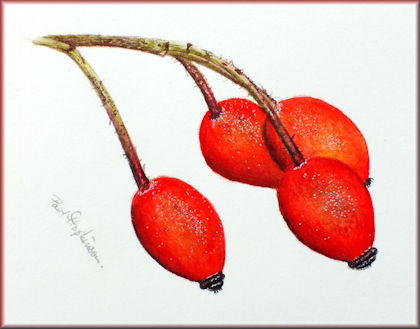 Button linking to a watercolour video tutorial on painting rose hips