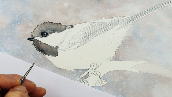 Chickadee watercolor painting progress photo from stage 1