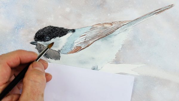 Chickadee watercolor painting progress photo from stage 2