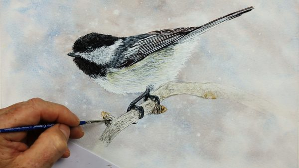 Chickadee watercolor painting progress photo from stage 4
