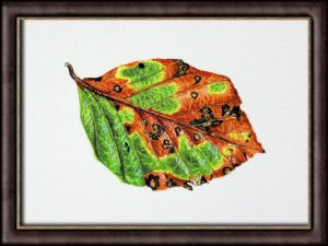 How to Paint Leaves - PDF Tutorial on an Autumn Beech Leaf