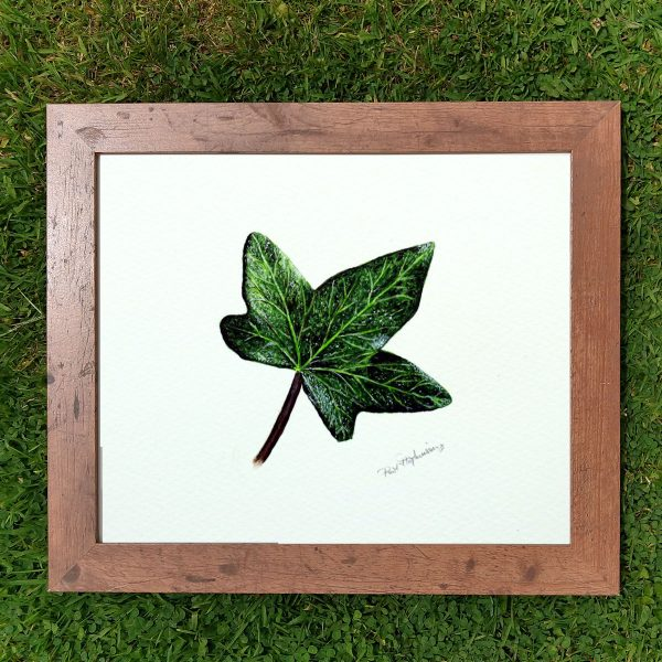 A framed realistic watercolor ivy leaf painting by Paul Hopkinson