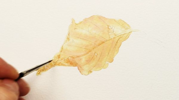 How to paint a realistic leaf in watercolor stage - 1