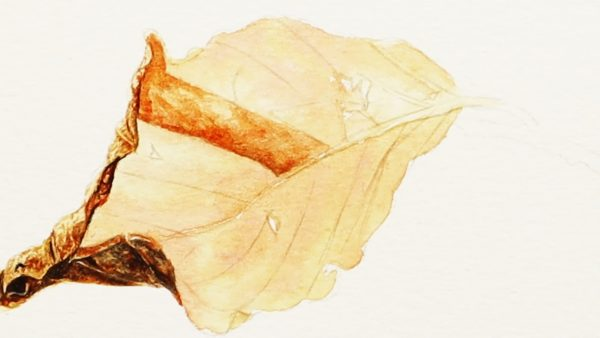 How to paint a realistic leaf in watercolor stage - 2