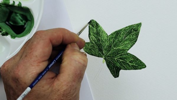How to paint a realistic watercolour ivy leaf - stage 3