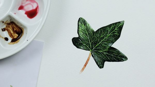 How to paint a realistic watercolour ivy leaf - stage 4