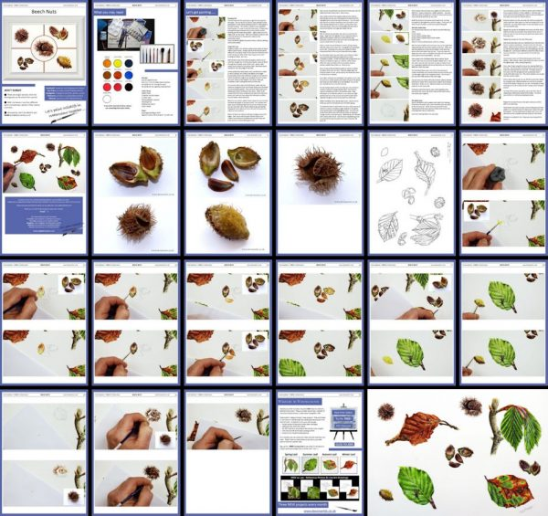 Overview of the PDF on painting beech nuts in watercolor