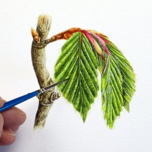 Paul Hopkinson painting a beech leaf in watercolour