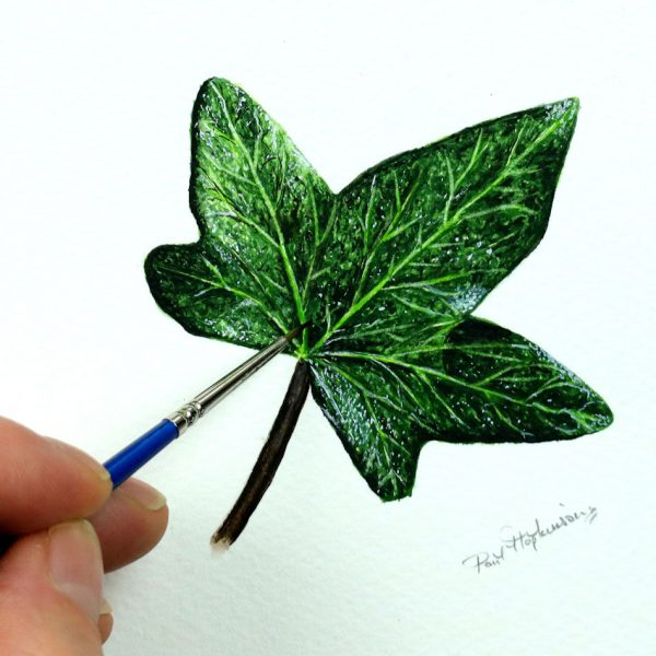 Paul Hopkinson painting an ivy leaf in realistic watercolor