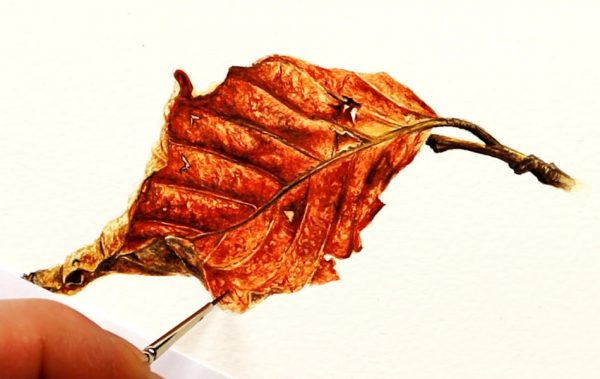 Paul Hopkinson painting a realistic watercolour leaf