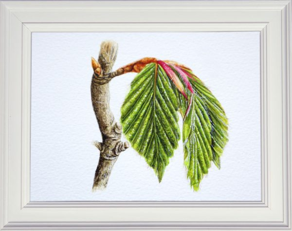 Spring beech leaf painted in watercolour framed