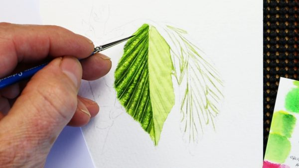 Stage 2 of painting a realistic watercolor leaf