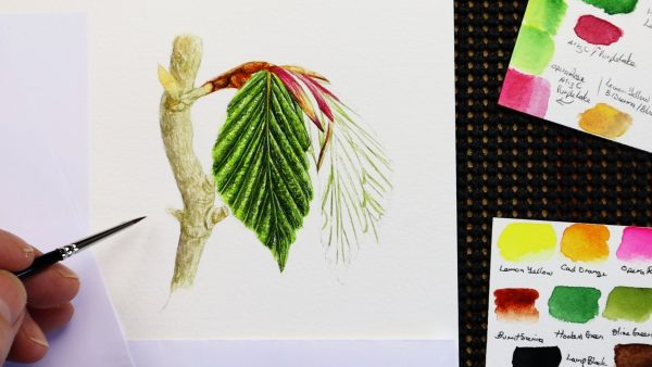 Stage 4 of painting a realistic watercolor leaf