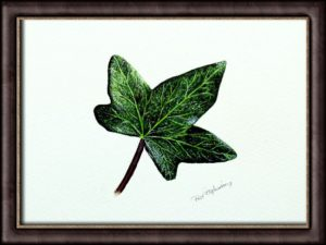 Watercolor painting of an ivy leaf by Paul Hopkinson displayed framed