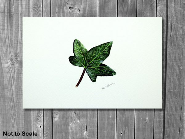 Watercolor painting of an ivy leaf by by Paul Hopkinson on a wall