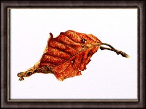 Paint Realistic Watercolour Leaves - PDF Tutorial on a Winter Beech Leaf