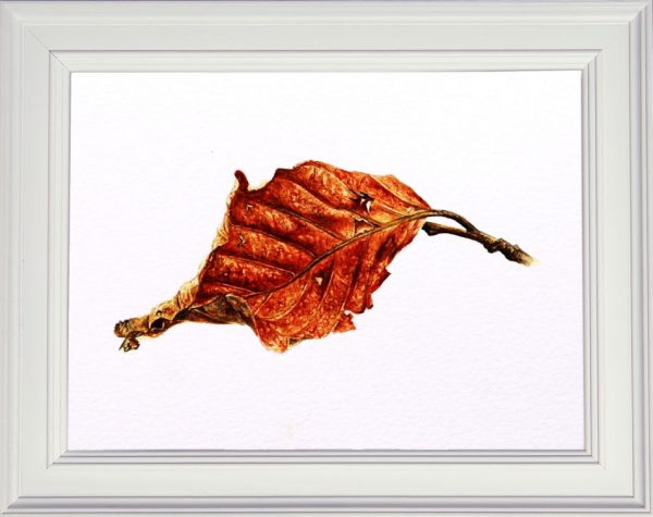 Watercolour beech leaf in a white frame