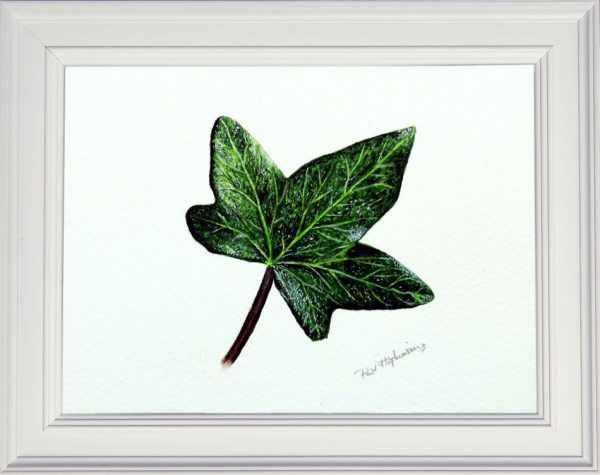 A watercolour ivy leaf by Paul Hopkinson framed