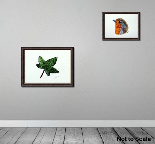 Watercolour painting of an ivy leaf by Paul Hopkinson framed and on a wall