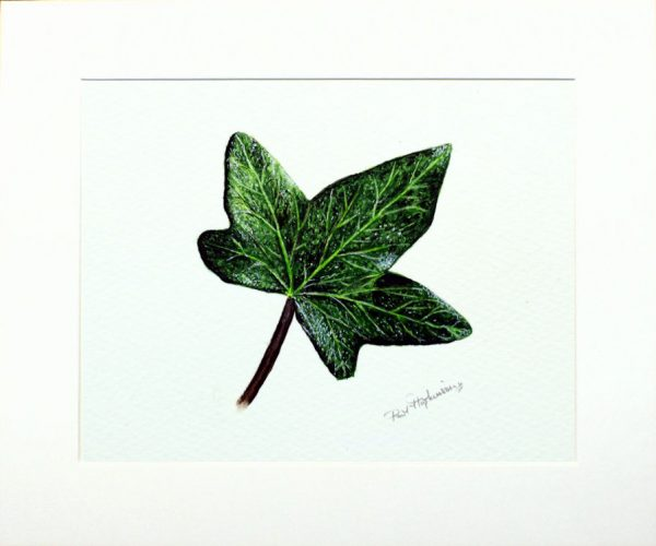 Watercolour painting of a leaf by Paul Hopkinson in a neutral mount