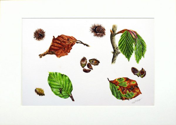 Watercolour paintings of leaf studies by Paul Hopkinson in a neutral mount