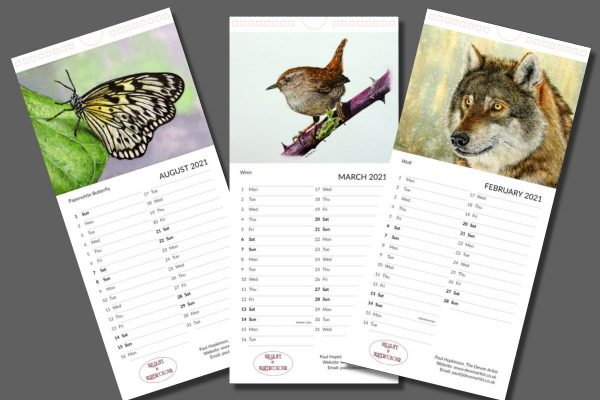 Wildlife illustrations in watercolour on a calendar