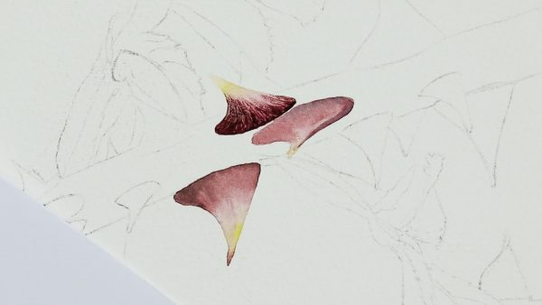 Botanical watercolor video lesson on painting rose thorns, stage 1
