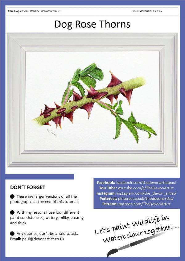 Botanical watercolour study PDF tutorial