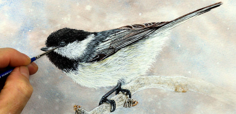 Chickadee bird painted in watercolor by Paul Hopkinson