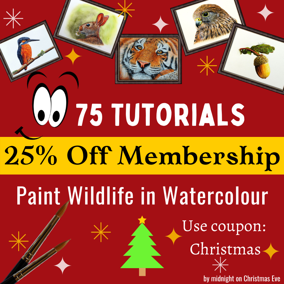 Christmas membership discount Devon Artist watercolour painting