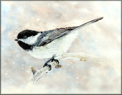 Watercolor video tutorial on painting a chickadee button link