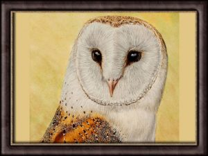 Step-by-Step Owl Painting Tutorial, Watercolour Lesson