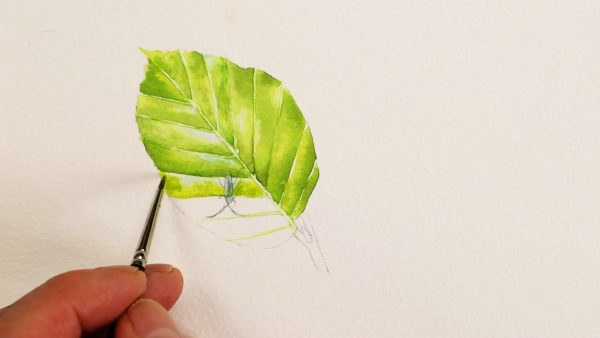 How to paint watercolour leaves realistically stage 1