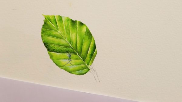How to paint watercolour leaves realistically stage 2