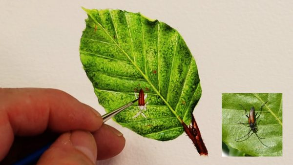 How to paint watercolour leaves realistically stage 4