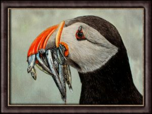 How to paint a puffin in watercolour