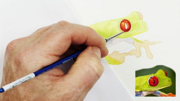 Stage 1 in painting a realistic tree frog in watercolour
