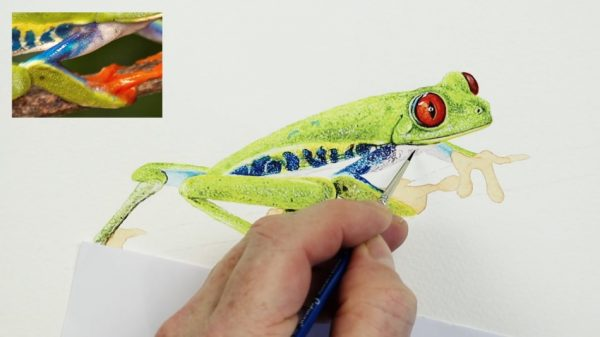Stage 2 in painting a realistic tree frog in watercolor