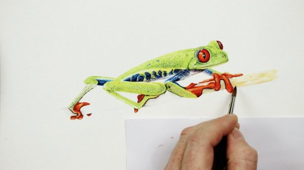 Stage 3 in painting a realistic tree frog in watercolour