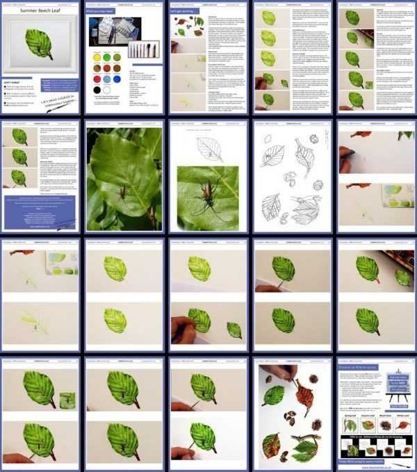 Overview of a watercolour botanical illustration PDF lesson