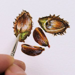 Paul Hopkinson painting beech nuts in watercolour