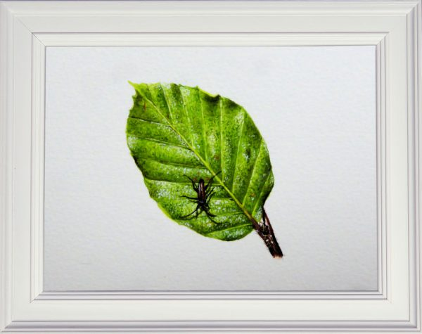 Summer beech leaf watercolor painting