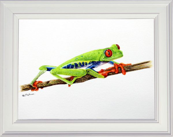 Framed realistic painting of a tree frog