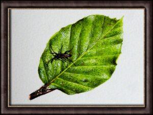 Downloadable PDF Watercolor Tutorial - Summer Beech Leaf Botanical Study