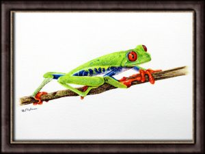 Watercolor painting of a tree frog by Paul Hopkinson